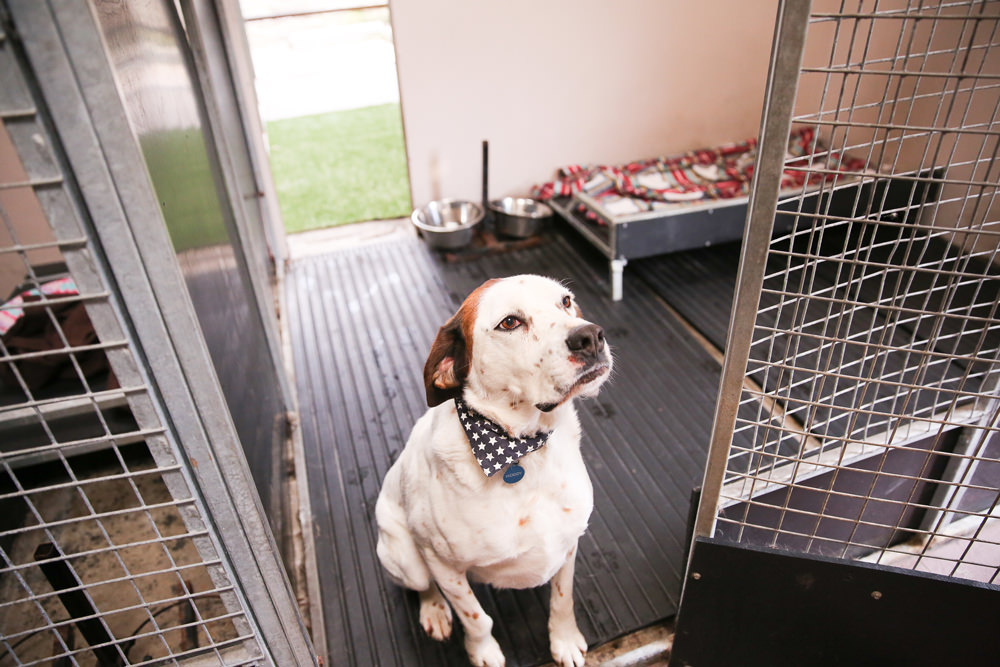 Fully Heated kennels
